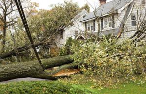 tree fall down